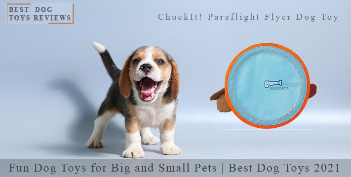Fun Dog Toys for Pets | Best Dog Toys 2021