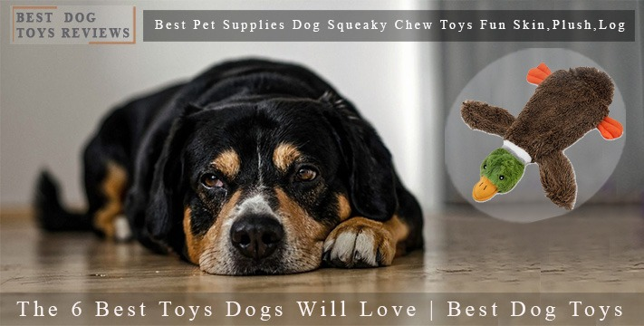 The 6 Best Toys Dogs Will Love | Best Dog Toys