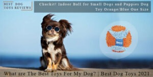 What are The Best Toys For My Dog? | Best Dog Toys 2021